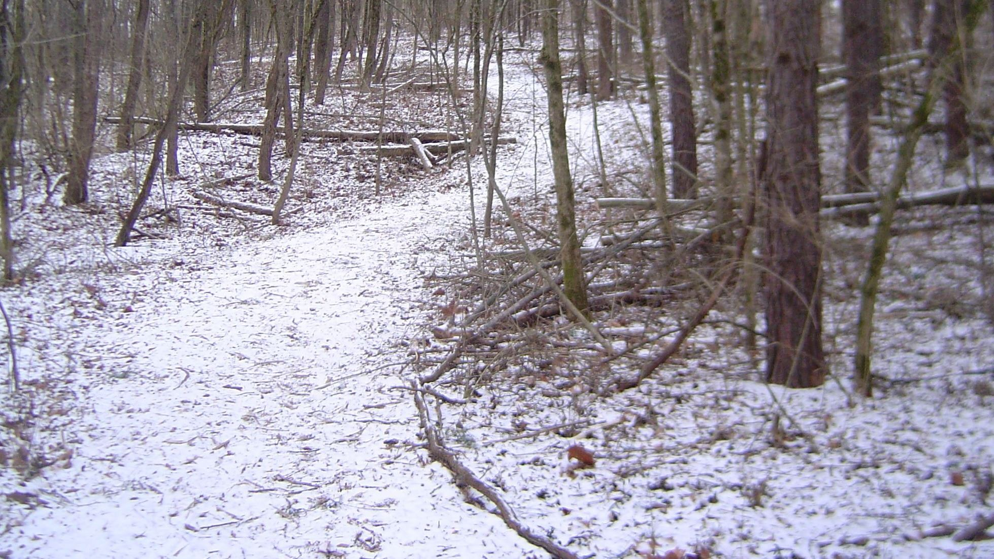 Bittersweet Woods Jan 2010